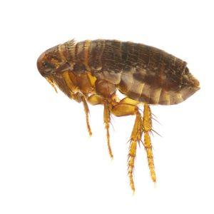 pest-control-4-300x300.jpg