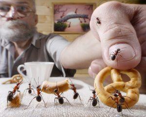 pest-control-2-300x240.jpg