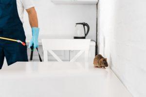 pest-control-3-300x200.jpg