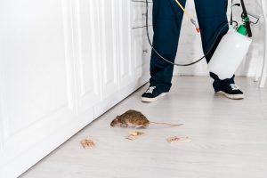 pest-control-6-300x200.jpg