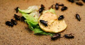 pest-control-4-300x160.jpg
