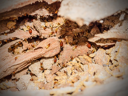 termite control Myrtle Beach