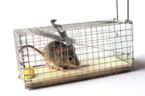 rodent-control-1-300x199.jpg