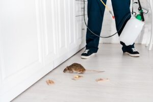 rodent-control-300x200.jpg