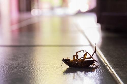 residential pest control Myrtle Beach