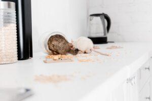 rodent-pest-control-300x200.jpg