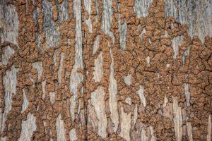 termite treatment Myrtle Beach