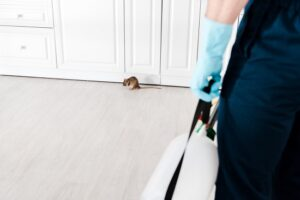 rodent-control-300x200.jpg