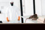 rodent control myrtle beach