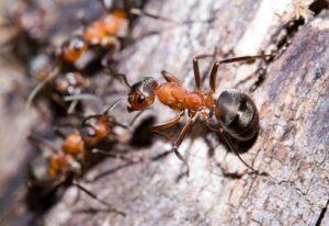 pest-control-300x206.jpg