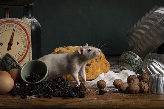 rodent control myrtle beach sc